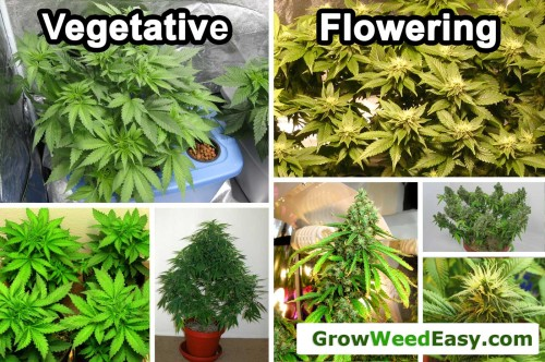 growing weed light schedules