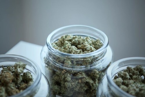 marijuana buds in jars