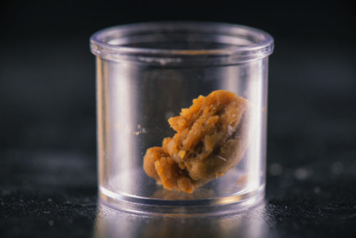 Cannabis extraction wax crumble used for dabbing