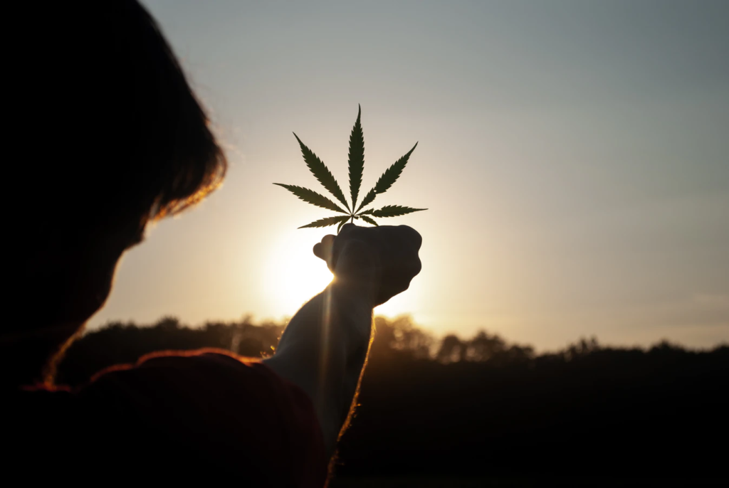 cannabis leaf being help up in the sun
