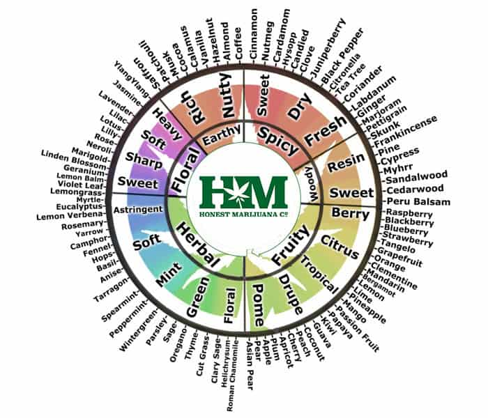 chart with different flavors and scents produced by Terpenes like myrcene